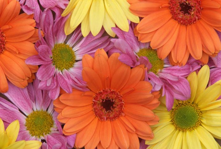 daisies - The Wardrobe Edit - Tending your Garden